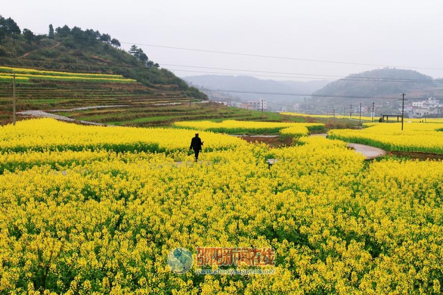 春分时节 看崀山的花花世界