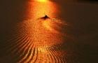 重阳节里看夕阳 雪峰桥上风光美
