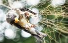 大祥区白洲社区蓬莱岛现捕鸟网捕杀野生鸟类现象