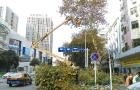 邵阳市宝庆东路铁砂岭路口至五一南路口33棵法国梧桐被伐