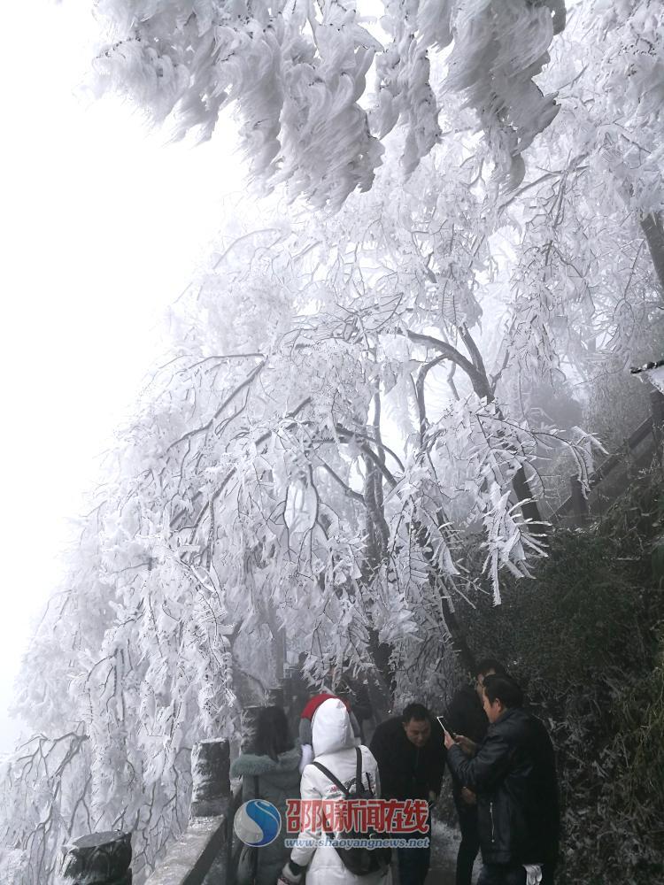 低温冻雨变幻出冰挂 冰雪中的崀山美爆啦