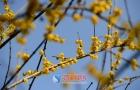 春暖花开 邵阳城里看美景