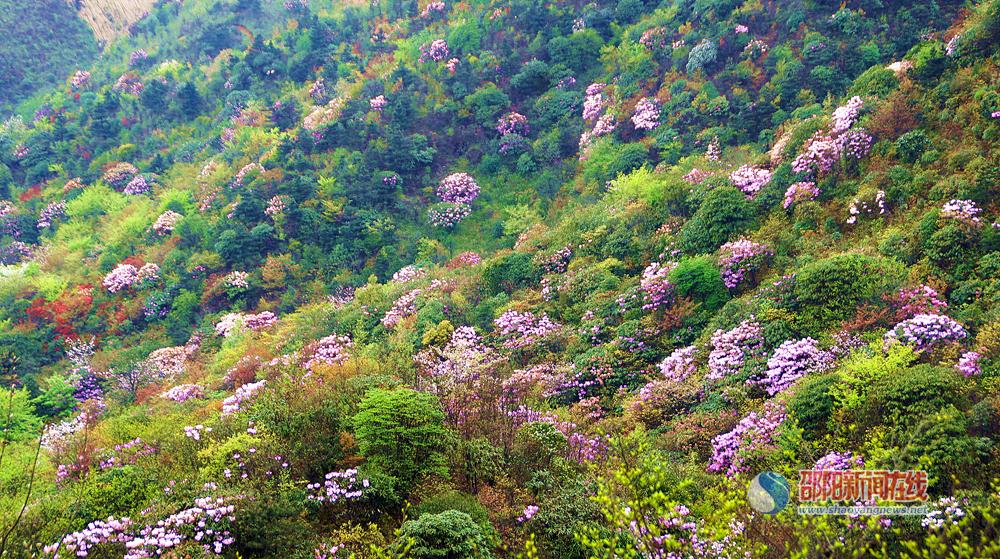 到湖南南山国家公园赏花去