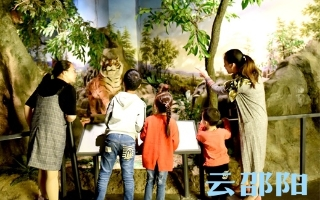 邵阳拍客|市博物馆、美术馆、图书馆、文化馆、非遗馆迎来参观热潮