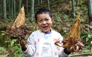 绥宁县林业局:打造百条竹林道助推产业扶贫