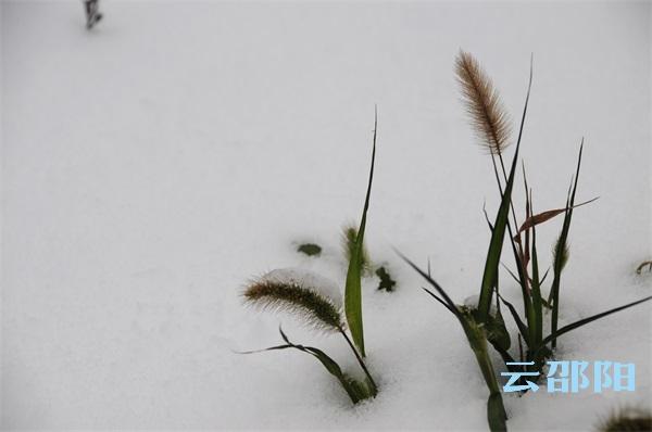 邵阳拍客丨城市雪景之三——街道小品