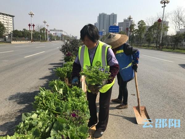 邵阳拍客丨春来绿化栽种忙