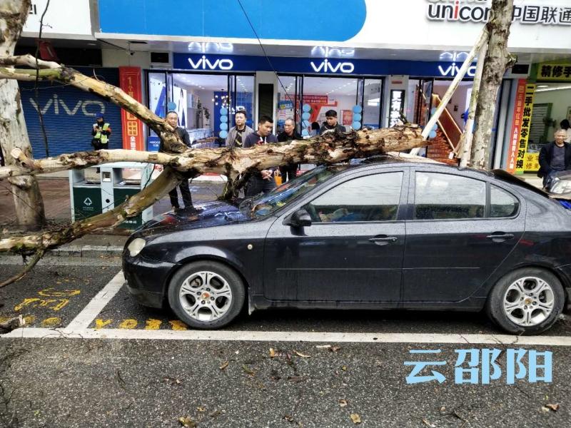 惊险!大树砸中小车,邵阳园林部门紧急处理