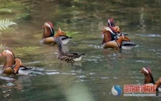 湖南南山国家公园过境候鸟数量创历史新高