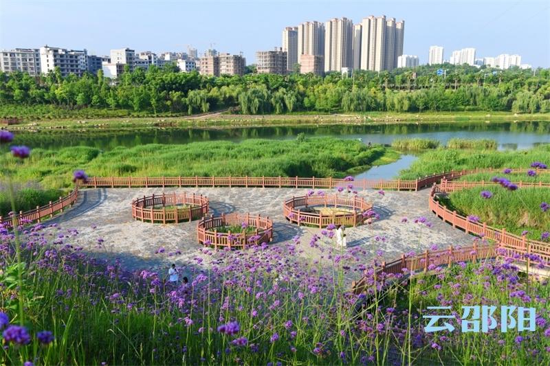 邵阳拍客   邵阳市区这里可欣赏成片花海