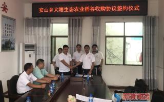 新宁县安山乡举办安山乡大塘生态农业公司稻谷收购签约仪式
