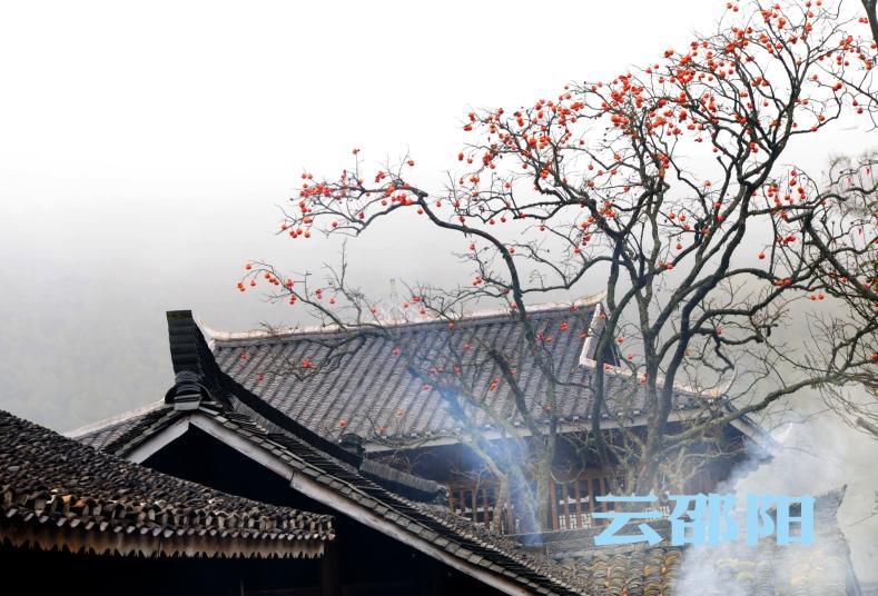 邵阳拍客 | 上堡侗寨柿子美