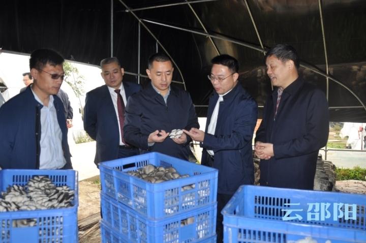 汤立斌调研省级现代农业特色产业园工作